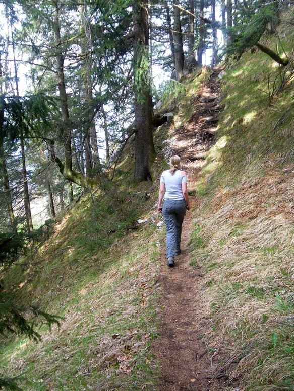Foto: Wolfgang Lauschensky / Wandertour / Kranzhorn 1368m über Kranzhornsteig / Steig im Steilwald / 13.04.2017 21:29:00