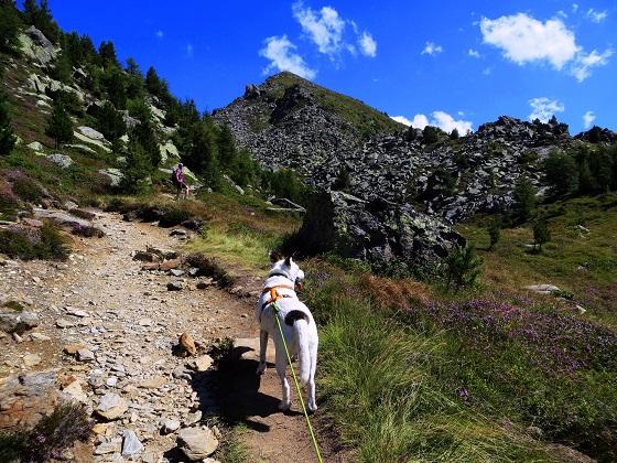 Foto: Andreas Koller / Wander Tour / Zirbenweg und Viggarspitze (2306m) / Die Viggarspitze in Sicht / 11.10.2017 22:58:55