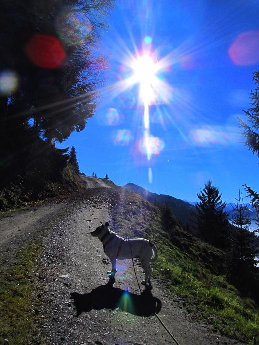 Foto: Andreas Koller / Wandertour / Großer Gebra - eine stille Tour in den Kitzbüheler Alpen (2057m) / 08.12.2017 17:27:31