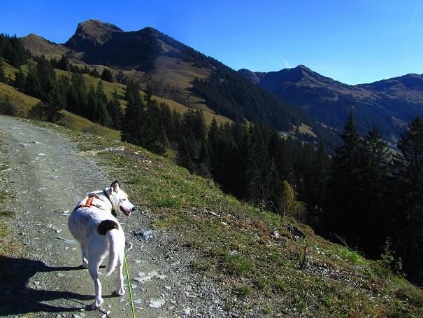 Foto: Andreas Koller / Wandertour / Großer Gebra - eine stille Tour in den Kitzbüheler Alpen (2057m) / 08.12.2017 17:27:25