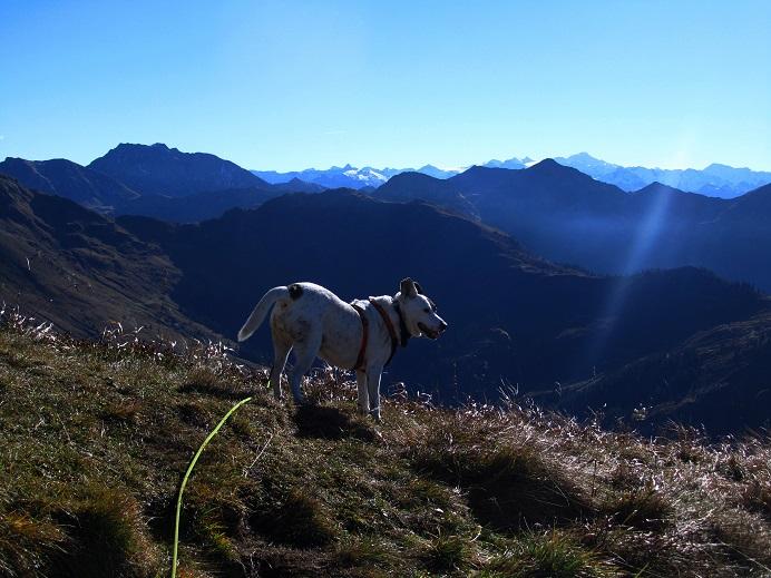Foto: Andreas Koller / Wandertour / Großer Gebra - eine stille Tour in den Kitzbüheler Alpen (2057m) / 08.12.2017 17:25:27