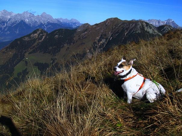 Foto: Andreas Koller / Wandertour / Großer Gebra - eine stille Tour in den Kitzbüheler Alpen (2057m) / 08.12.2017 17:25:19