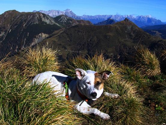 Foto: Andreas Koller / Wandertour / Großer Gebra - eine stille Tour in den Kitzbüheler Alpen (2057m) / 08.12.2017 17:23:48