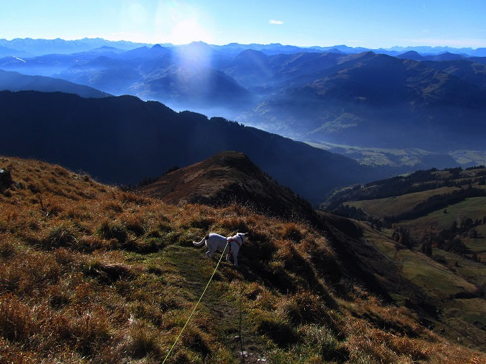 Foto: Andreas Koller / Wandertour / Großer Gebra - eine stille Tour in den Kitzbüheler Alpen (2057m) / Abstieg vom Großen Gebra / 08.12.2017 17:22:49