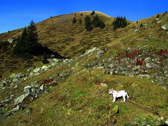 Foto: Andreas Koller / Wandertour / Großer Gebra - eine stille Tour in den Kitzbüheler Alpen (2057m) / 08.12.2017 17:22:33