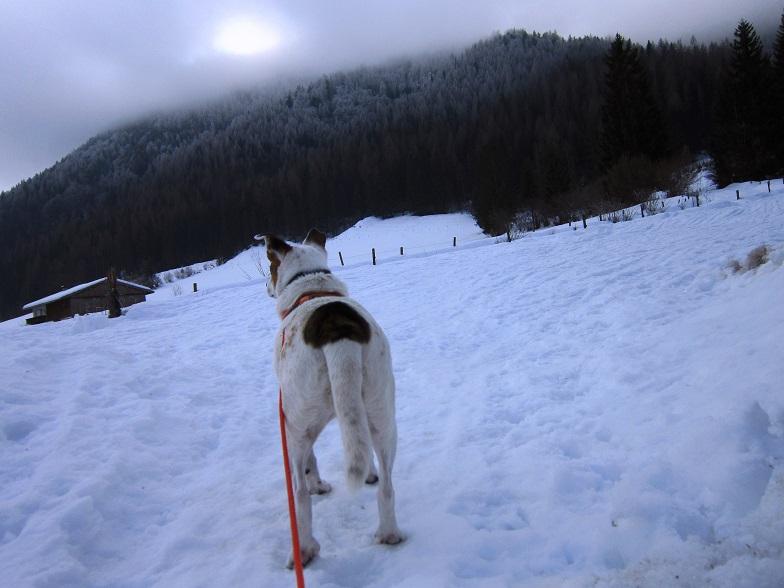 Foto: Andreas Koller / Schneeschuhtour / Wallerberg mit Schneeschuhen (1682m) / Von St. Ulrich am Pillersee mit Schneeschuhen auf den Wallerberg / 05.03.2018 23:12:42