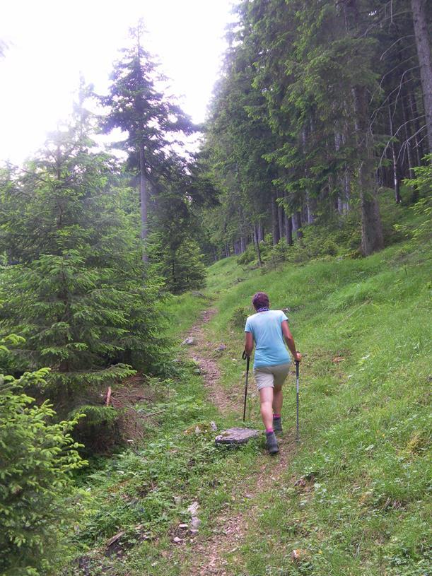 Foto: Wolfgang Lauschensky / Wandertour / Spitzstein Überschreitung via Nordwandsteig von Erl - Bike&Hike / Anstieg Richtung Feichtenalm / 13.06.2018 14:11:03