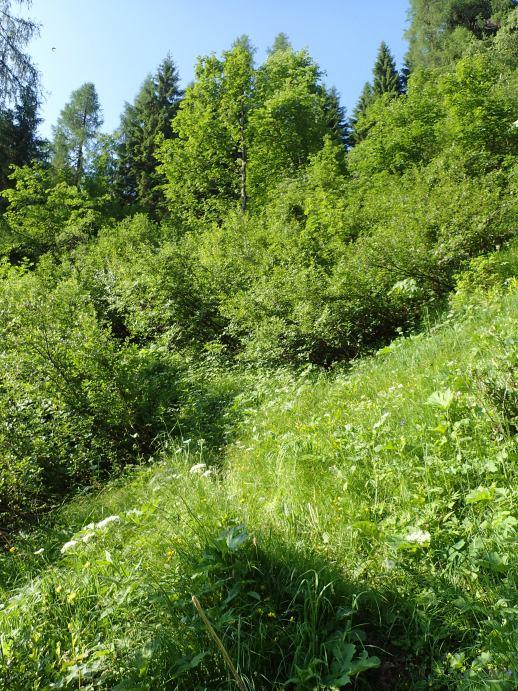 Foto: Manfred Karl / Wandertour / Kleiner Bärenstaffl, 2013 m / Am Ende der Rinne geht es nach links in den Wald / 02.07.2018 19:27:14