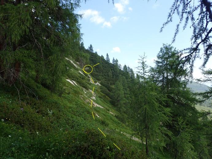 Foto: Manfred Karl / Wandertour / Kleiner Bärenstaffl, 2013 m / Beginn der Querung durch die Ostflanke mit dem Einstieg in die Latschenzone / 02.07.2018 19:22:35