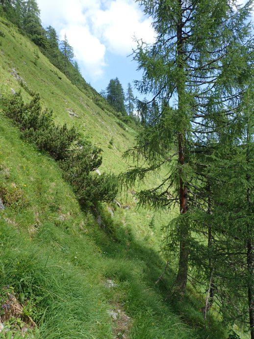 Foto: Manfred Karl / Wandertour / Kleiner Bärenstaffl, 2013 m / Am Rückweg: Beginn der Querung des steilen Grashanges / 02.07.2018 19:16:21