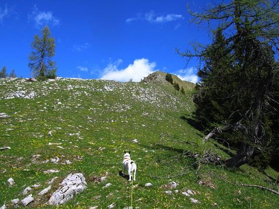 Foto: Andreas Koller / Wander Tour / Poludnig - kurz oder lang? (1999m) / 12.07.2018 01:12:27
