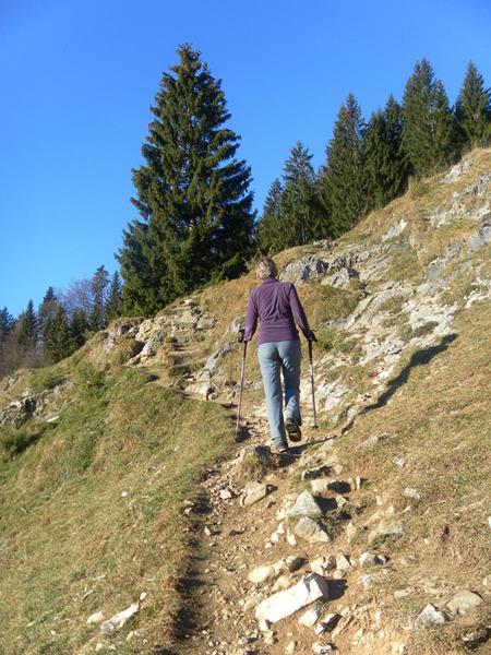 Foto: Wolfgang Lauschensky / Wandertour / Pasterkopf oder Pastaukopf über Kranzhorn / am Weg zur Kranzhornalm / 22.11.2018 18:23:26