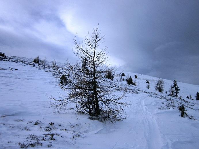 Foto: Andreas Koller / Skitour / Vom Salzstieglhaus auf den Speikkogel (1993m) / 10.12.2018 01:48:21