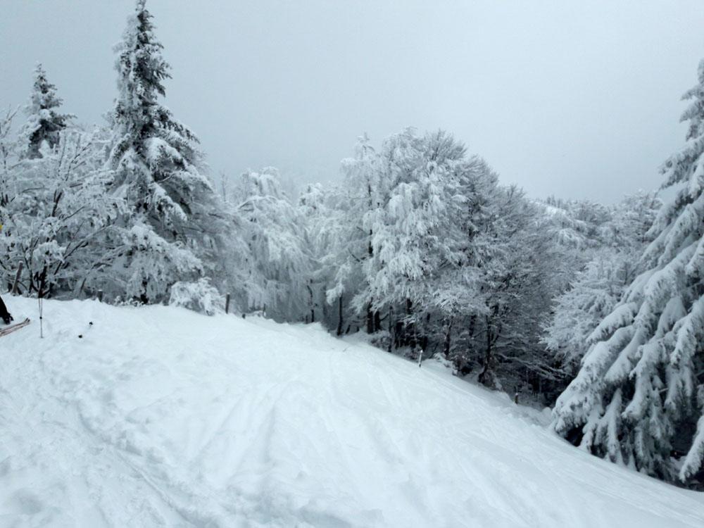 Foto: Rupert Gredler / Skitour / Spielberg, eine rustkale Variante / Einfahrt ins Waldstück / 18.12.2018 17:58:08