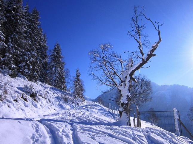 Foto: Andreas Koller / Skitour / Auracher Wildparktour Gaisberg (1798m) / 24.12.2018 15:31:20
