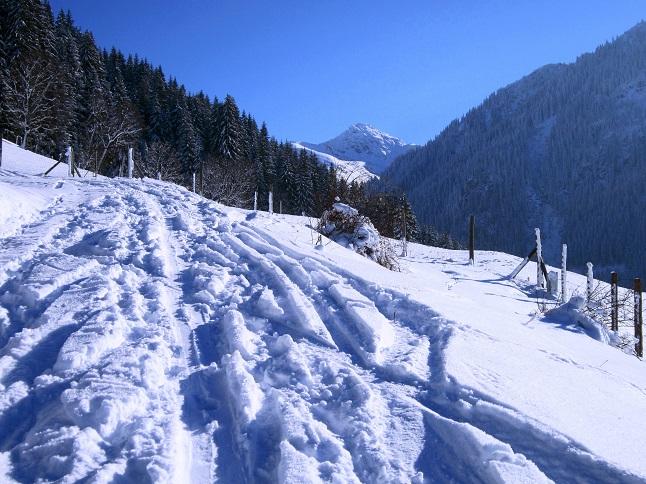 Foto: Andreas Koller / Skitour / Auracher Wildparktour Gaisberg (1798m) / 24.12.2018 15:31:11