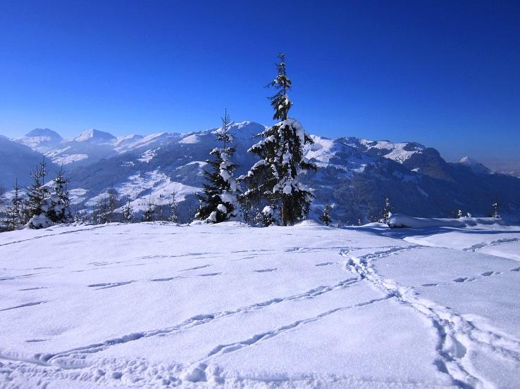 Foto: Andreas Koller / Skitour / Auracher Wildparktour Gaisberg (1798m) / 24.12.2018 15:30:34
