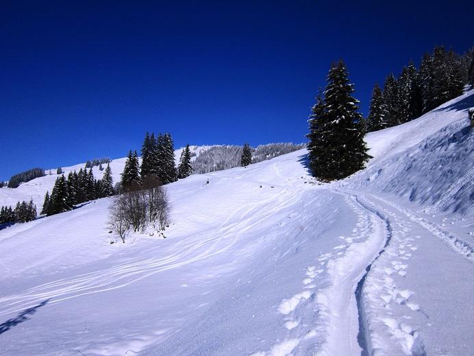 Foto: Andreas Koller / Skitour / Auracher Wildparktour Gaisberg (1798m) / 24.12.2018 15:29:52
