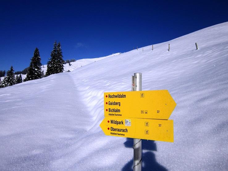 Foto: Andreas Koller / Skitour / Auracher Wildparktour Gaisberg (1798m) / 24.12.2018 15:29:34