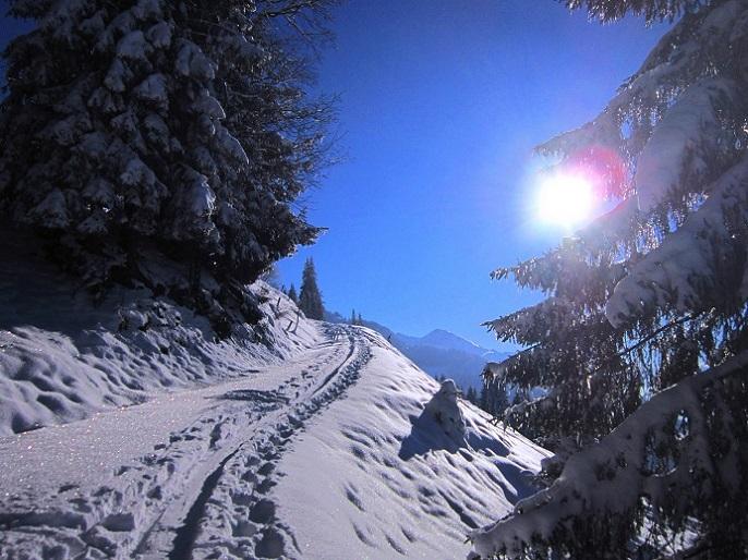 Foto: Andreas Koller / Skitour / Auracher Wildparktour Gaisberg (1798m) / 24.12.2018 15:29:17
