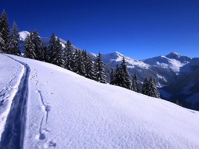 Foto: Andreas Koller / Skitour / Auracher Wildparktour Gaisberg (1798m) / 24.12.2018 15:27:52