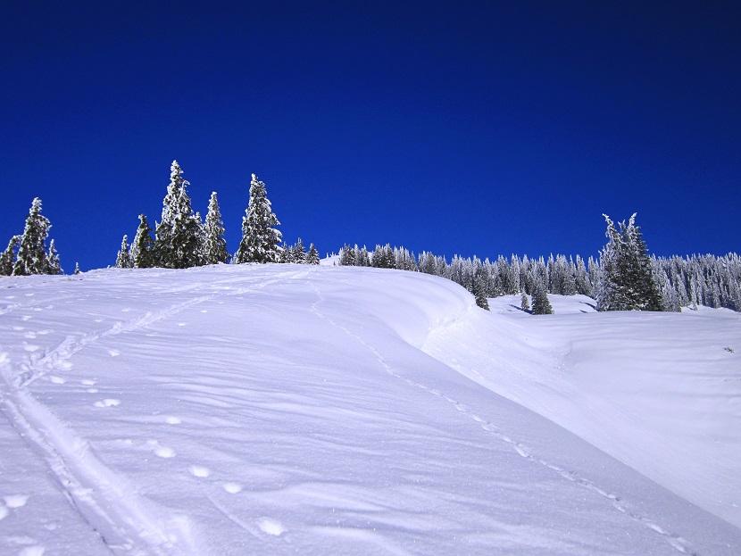 Foto: Andreas Koller / Skitour / Auracher Wildparktour Gaisberg (1798m) / 24.12.2018 15:25:21