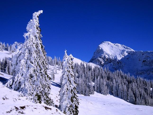 Foto: Andreas Koller / Skitour / Auracher Wildparktour Gaisberg (1798m) / 24.12.2018 15:12:15