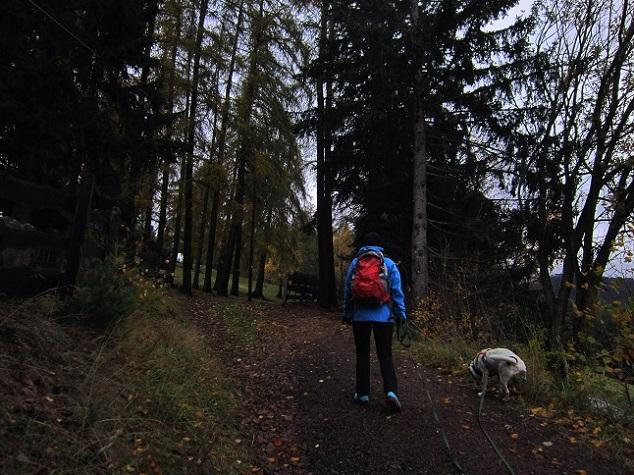 Foto: Andreas Koller / Wander Tour / Ausflug zur Leadner Alm (1530m) / 09.01.2019 02:36:39