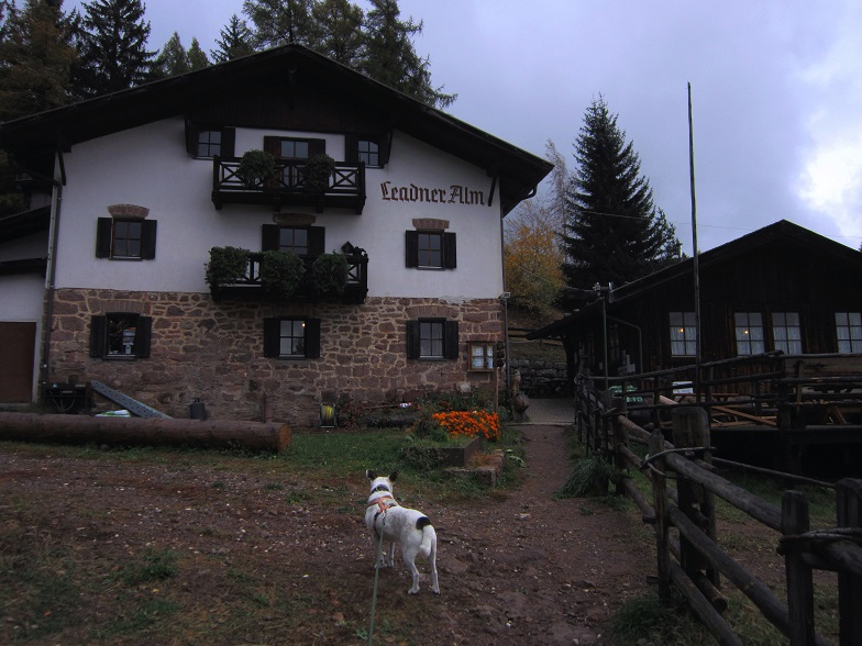 Foto: Andreas Koller / Wander Tour / Ausflug zur Leadner Alm (1530m) / Leadner Alm / 09.01.2019 02:35:26