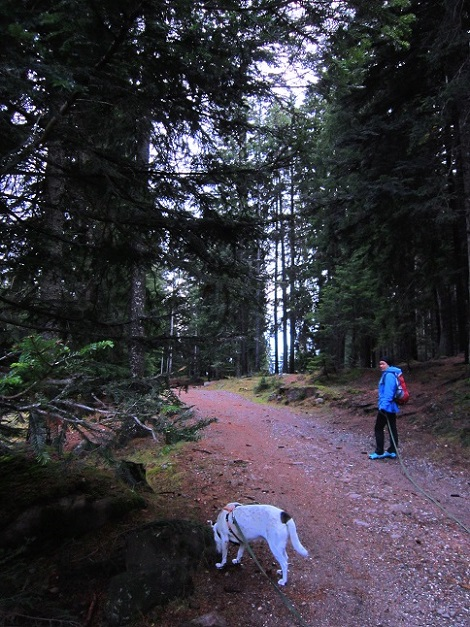 Foto: Andreas Koller / Wander Tour / Ausflug zur Leadner Alm (1530m) / 09.01.2019 02:33:10