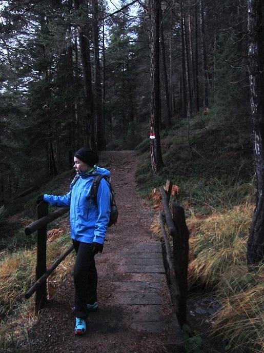 Foto: Andreas Koller / Wander Tour / Ausflug zur Leadner Alm (1530m) / Der schöne Waldweg führt direkt zum Grünen Baum zurück / 09.01.2019 02:32:26