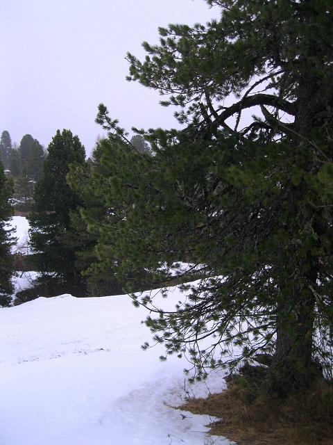 Foto: Andreas Koller / Ski Tour / Trainingstour Kornock (2193m) / 12.05.2019 17:04:08