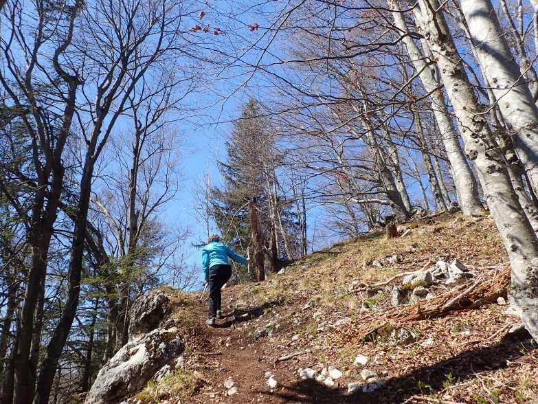 Foto: Manfred Karl / Wandertour / Gitzenberg, 918 m / Noch einige Meter zum höchsten Punkt / 28.05.2020 19:52:25
