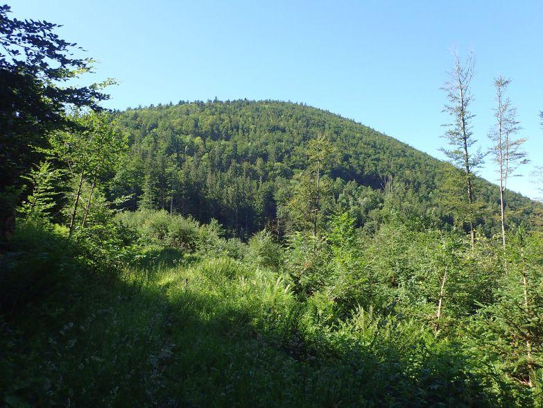 Foto: Manfred Karl / Wandertour / Lidaunberg von Hof / Der dicht bewaldete Lidaun / 03.08.2020 06:35:58