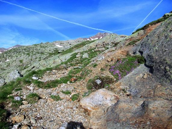 Foto: Andreas Koller / Wandertour / TG Pflerschtal3: Schneespitze (3178m) / 31.07.2020 15:56:54