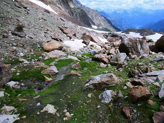 Foto: Andreas Koller / Wandertour / TG Pflerschtal3: Schneespitze (3178m) / 31.07.2020 15:51:21