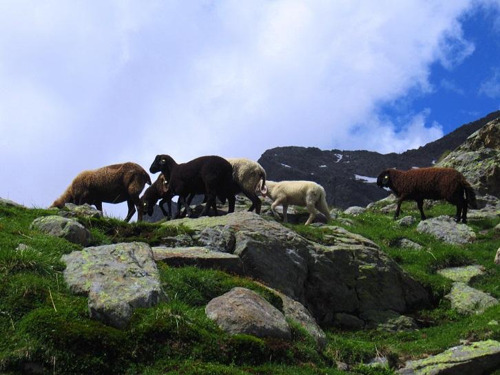 Foto: Andreas Koller / Wandertour / TG Pflerschtal3: Schneespitze (3178m) / 31.07.2020 15:51:06