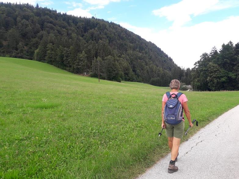Foto: Wolfgang Lauschensky / Wandertour / Wöhrer Köpfl 782m Überschreitung / Wöhrer Köpfl von der Südumgehung / 29.08.2020 20:22:56