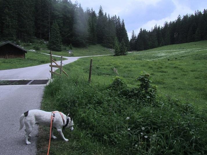 Foto: Andreas Koller / Wandertour / Grenzberg Spitzstein vom Erlerberg (1596m) / Unterwegs am Erlerberg / 30.09.2020 23:00:57
