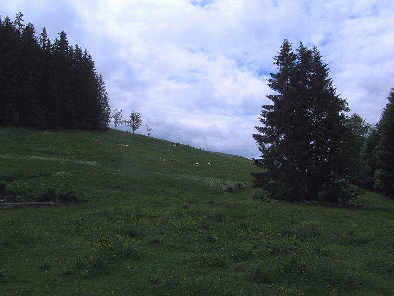 Foto: Andreas Koller / Wandertour / Grenzberg Spitzstein vom Erlerberg (1596m) / 30.09.2020 23:00:43