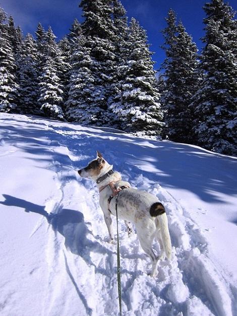 Foto: Andreas Koller / Schneeschuhtour / Weinebene Schneeschuhtour auf zwei Gipfel (1853m) / 04.01.2021 21:58:11