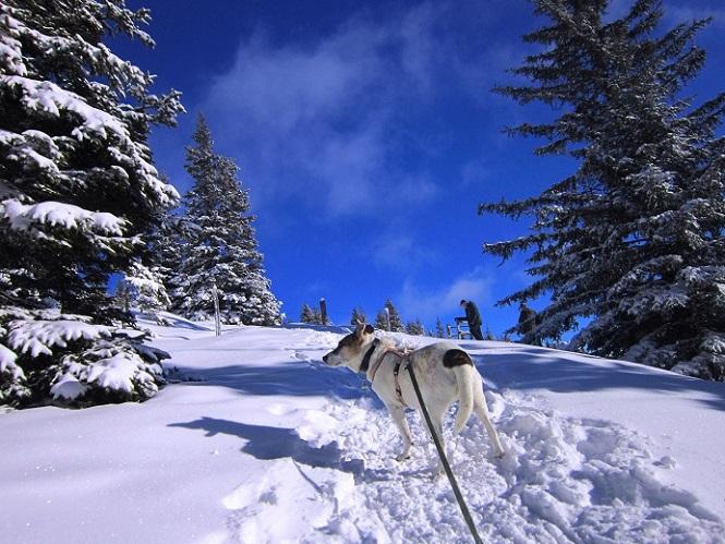 Foto: Andreas Koller / Schneeschuhtour / Weinebene Schneeschuhtour auf zwei Gipfel (1853m) / 04.01.2021 21:57:56
