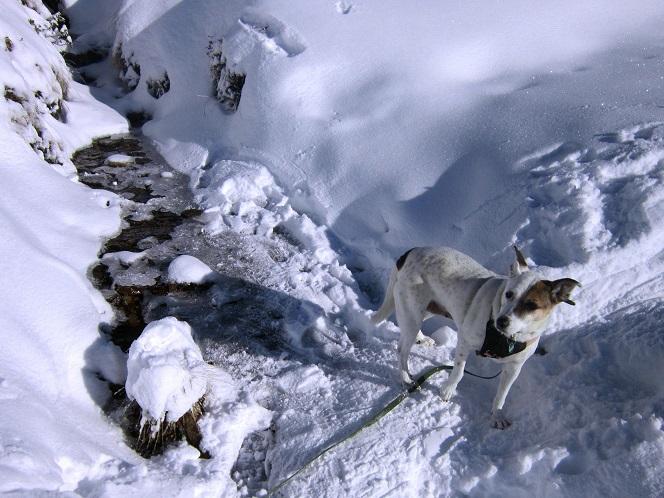 Foto: Andreas Koller / Schneeschuhtour / Weinebene Schneeschuhtour auf zwei Gipfel (1853m) / 04.01.2021 21:57:41