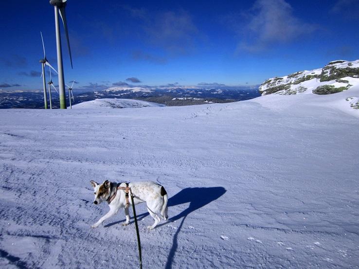 Foto: Andreas Koller / Schneeschuhtour / Weinebene Schneeschuhtour auf zwei Gipfel (1853m) / 04.01.2021 21:55:10