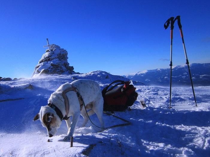 Foto: Andreas Koller / Schneeschuhtour / Weinebene Schneeschuhtour auf zwei Gipfel (1853m) / 04.01.2021 21:52:24