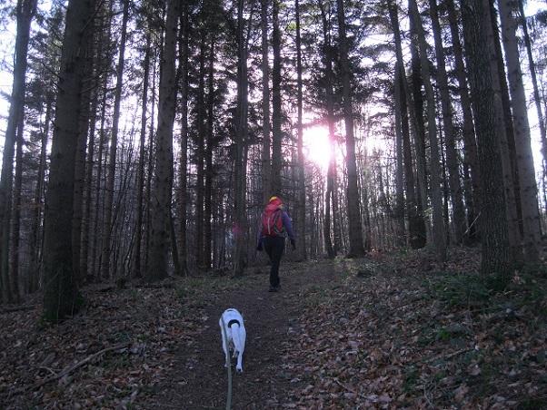 Foto: Andreas Koller / Wandertour / WIR - Runde über den Jochgrabenberg (645m) / 10.01.2021 23:47:02