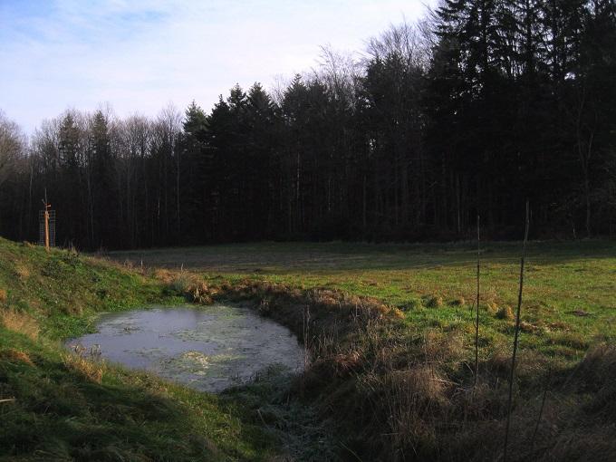 Foto: Andreas Koller / Wandertour / WIR - Runde über den Jochgrabenberg (645m) / 10.01.2021 23:46:58