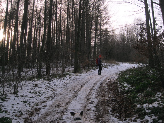 Foto: Andreas Koller / Wandertour / WIR - Runde über den Jochgrabenberg (645m) / 10.01.2021 23:45:07