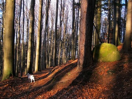 Foto: Andreas Koller / Wandertour / WIR - Runde über den Jochgrabenberg (645m) / 10.01.2021 23:39:09