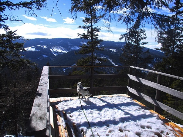 Foto: Andreas Koller / Schneeschuhtour / Hebalm - Klassiker Bärofen (1720m) / 19.02.2021 03:17:09